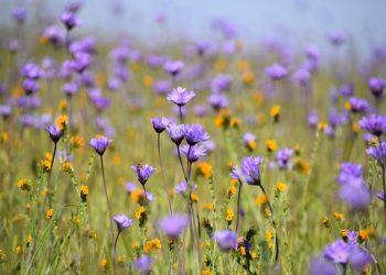 Eine Blume überlegt sich nicht … Montagsimpulse (216)
