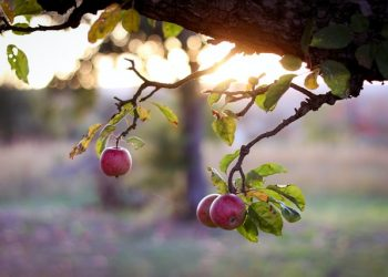Geduld ist ein Baum … Montagsimpulse (215)